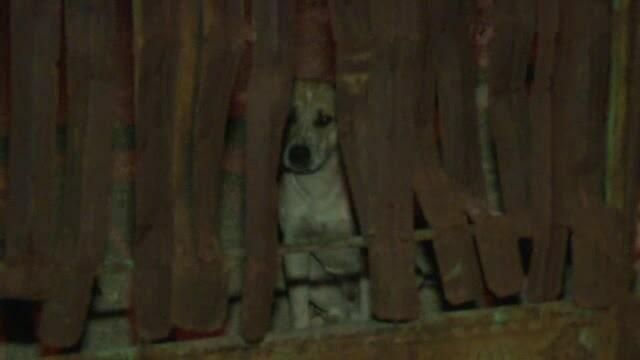 Barbat din Dambovita, ucis in curte chiar de cainii lui. Fratele victimei: \