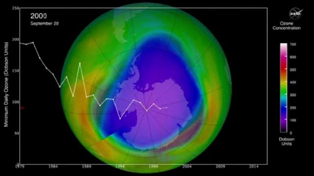 gaura ozon