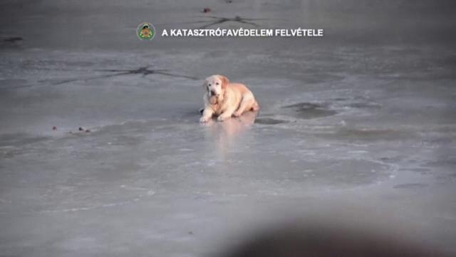 Un cățel s-a aventurat pe un lac îngheţat şi a rămas blocat. Cum a fost salvat