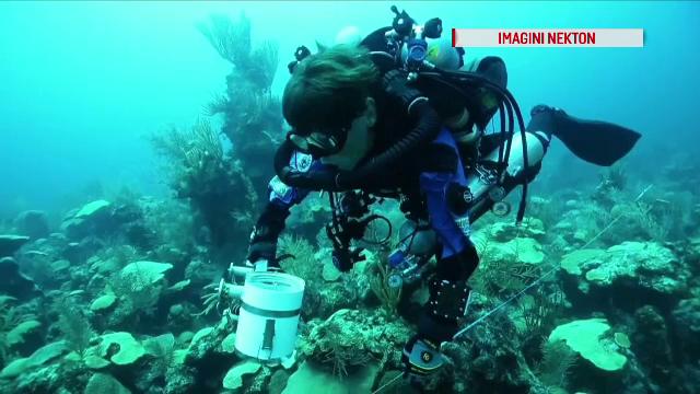Prima transmisie LIVE din adâncul oceanului. Scafandrii vor coborî în \