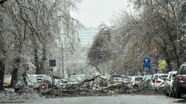 50 de mașini, avariate din cauza copacilor căzuți pe străzile din București