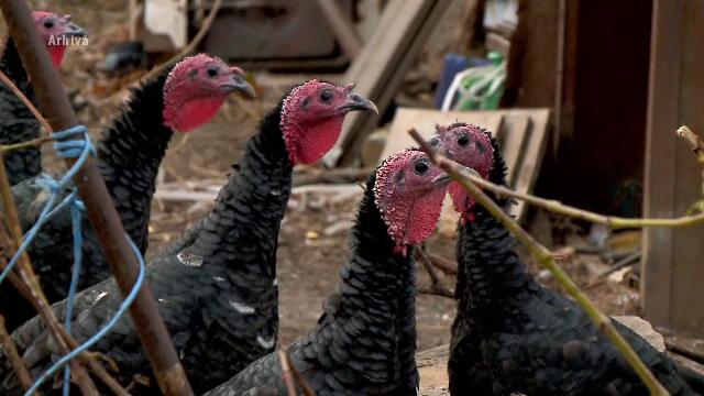 Gripa aviară s-a întors în România. A fost detectată la o fermă din Maramureș