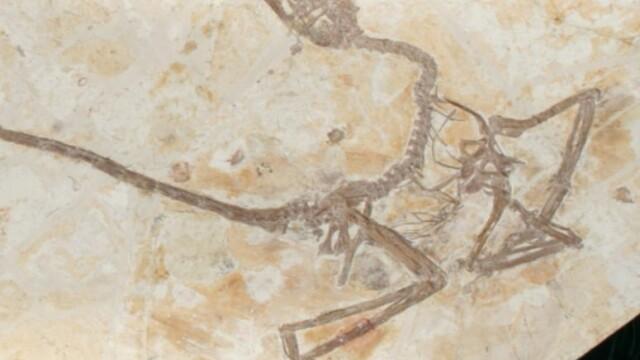 O nouă specie de dinozaur descoperită în China. Cum arăta \'\'dragonul dansator\'\'