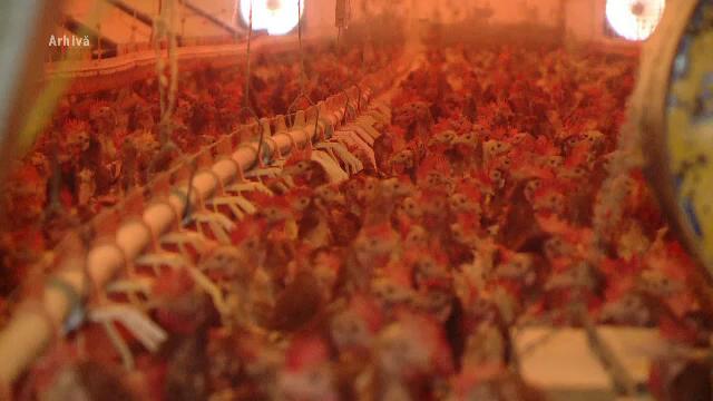Focarele de gripă aviară s-au extins în 24 de localități. Autoritățile sunt în alertă - Imaginea 3