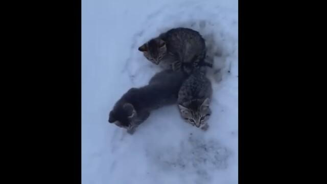 VIDEO viral. Un bărbat a salvat cu cafea caldă trei pui de pisică prinşi în gheaţă