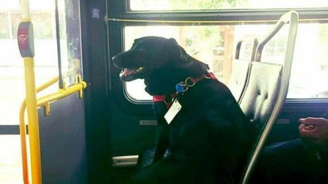 Câinele care a uimit internetul. Ce face în fiecare zi când pleacă de acasă GALERIE FOTO - Imaginea 1