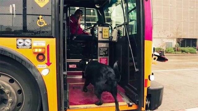 Câinele care a uimit internetul. Ce face în fiecare zi când pleacă de acasă GALERIE FOTO - Imaginea 2