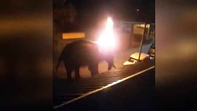 VIDEO. Un elefant a murit în chinuri în India. Oamenii au aruncat în el cu cauciucuri aprinse