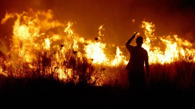 incendii de vegetatie