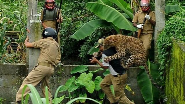 FOTO. Momentul in care un leopard ataca un om. Animalul a mutilat in total 6 persoane - Imaginea 1