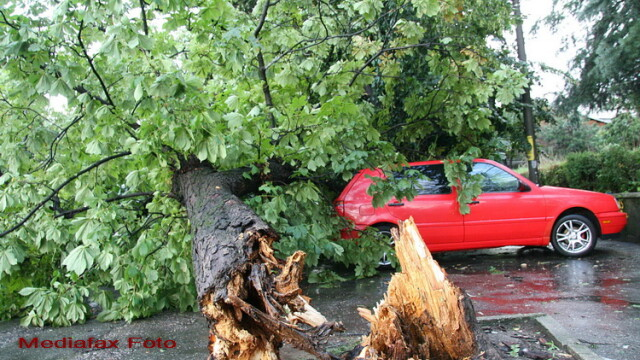 Furtuna loveste si langa biserica. Un copac a cazut peste 3 masini parcate langa Catedrala din Cluj