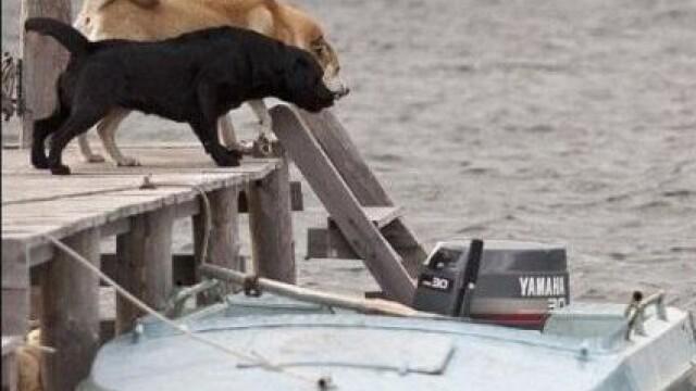 Stapanul acestor caini a incremenit cand a vazut la ce latrau. Ce a iesit din apa in fata lor - Imaginea 4