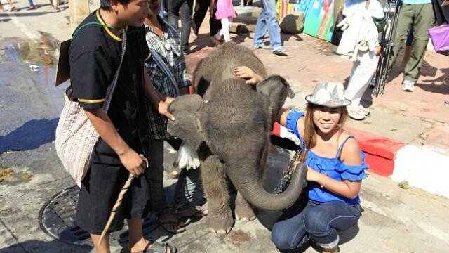 elefanti chinuiti