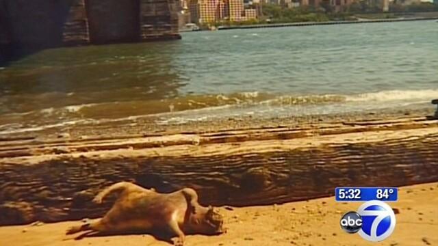 Locuitorii din New York, ingroziti de aparitia de pe malul raului. Expertii nu au nicio explicatie - Imaginea 2