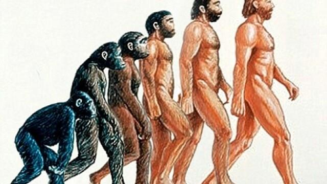 evolutia speciei umane, desen