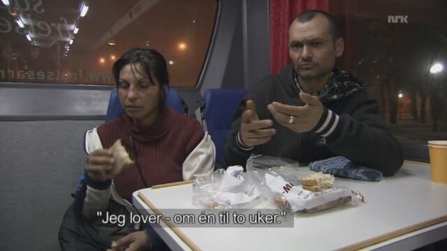 cersetori norvegia