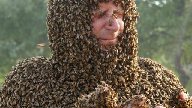 Concursul interzis celor slabi de inima. Ce s-a intamplat cu acest barbat dupa ce s-a lasat acoperit de sute de mii de albine - Imaginea 2