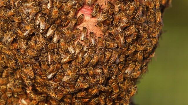 Concursul interzis celor slabi de inima. Ce s-a intamplat cu acest barbat dupa ce s-a lasat acoperit de sute de mii de albine - Imaginea 4