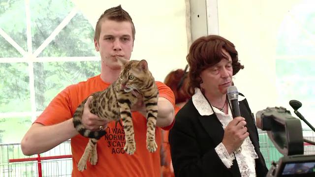 Pisici de lux. Cum arata felina care al carei pret sare de 2.000 de euro