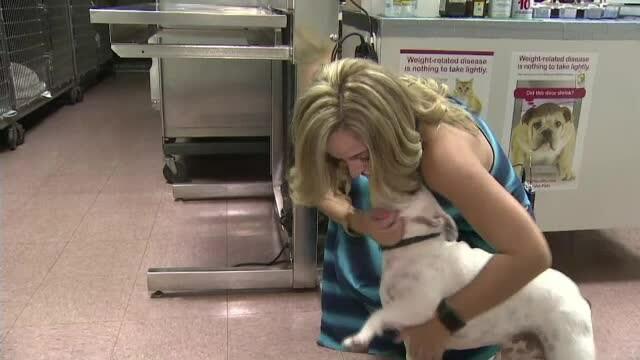 O tanara din Miami s-a dus de urgenta cu buldogul la veterinar. Ce a descoperit dupa ce i-a facut radiografie animalului