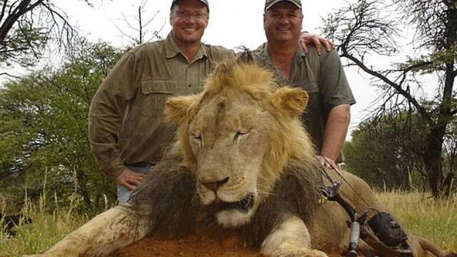 Ucigasul leului Cecil ar putea fi extradat in Zimbabwe. 100.000 de oameni au cerut aducerea sa in fata justitiei