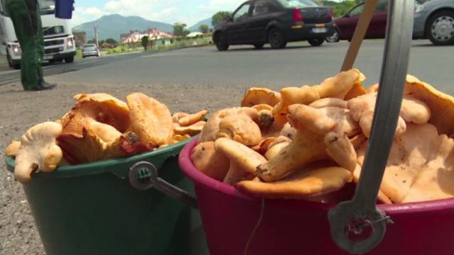 Considerate delicatese in strainatate, la noi ciupercile de padure se vand la marginea drumului. Cat costa un kg de galbiori