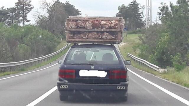 Transport inaripate