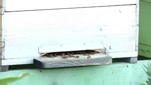 Trei persoane atacate de un roi de albine in acelasi loc in care un barbat a murit dupa ce a fost intepat. Cum a fost posibil