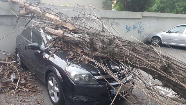 copac cazut Bucuresti