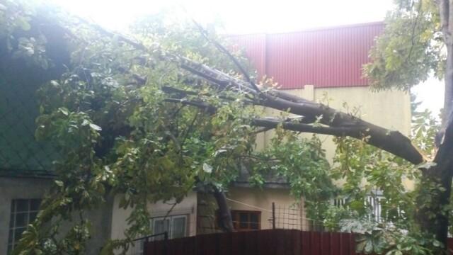 10 persoane, ranite de copacii doborati de vijelie, la Galati. O casa, 5 masini si un gard au fost avariate de furtuna. VIDEO