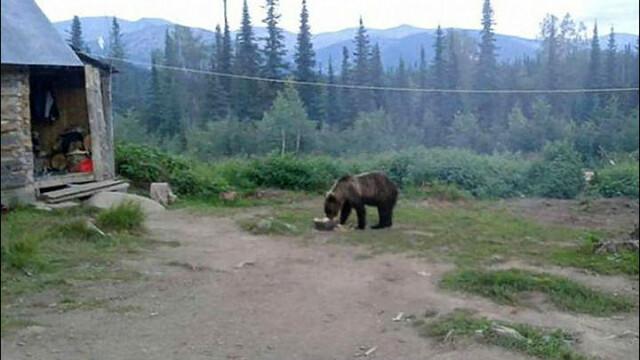 25 de copii din Rusia au ramas captivi intr-o tabara, dupa ce un urs a devenit agresiv. Gestul iresponsabil al angajatilor