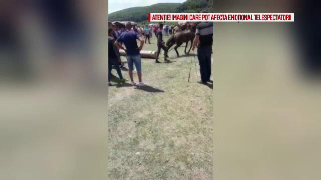 Scene șocante filmate la un târg din Argeș. Cai, bătuți cu sălbăticie de stăpâni