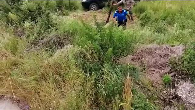 Metoda ingenioasă prin care a fost salvat un pui de urs căzut într-un canal - Imaginea 2