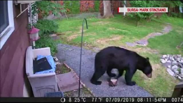 Un câine a devenit erou într-un cartier, după ce a gonit un urs care intrase într-o curte