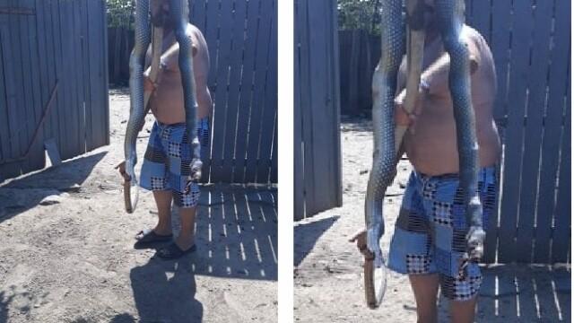 Șarpe imens, prins și ucis într-un sat din Tulcea. Face parte dintr-o specie protejată