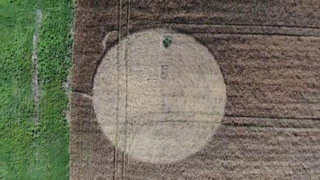 Cerc perfect, apărut în mod misterios într-un lan de grâu din Ungaria. Ce semnificații ar putea avea