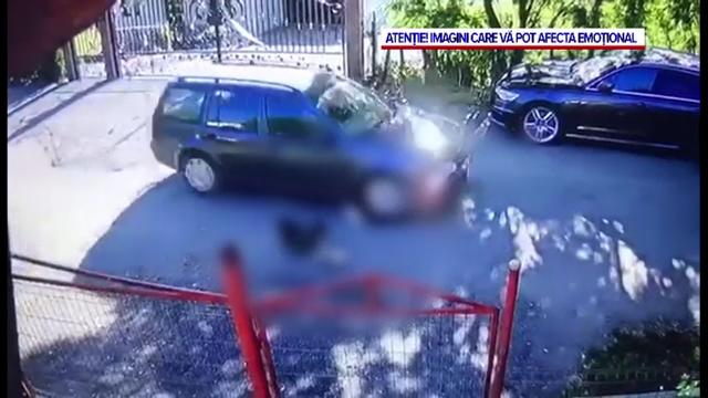 Imagini șocante. O mașină trece peste niște căței întinși la soare pe o șosea din Județul Suceava