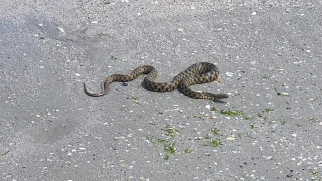 VIDEO. Un șarpe a fost zărit pe plaja din Mamaia. Reacția turiștilor - Imaginea 1