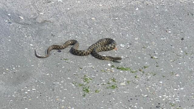 VIDEO. Un șarpe a fost zărit pe plaja din Mamaia. Reacția turiștilor - Imaginea 3