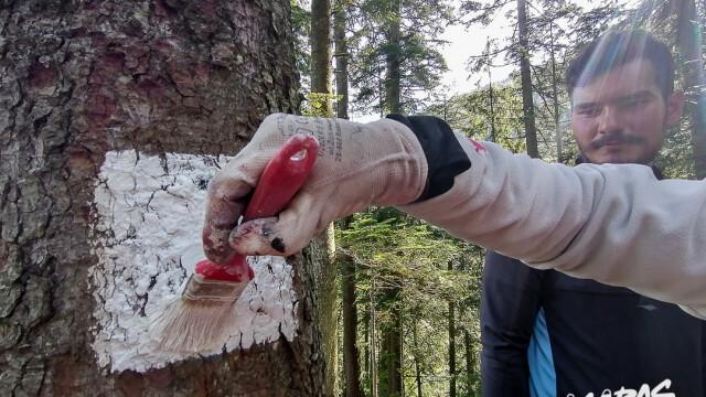 Cu ajutorul voluntarilor, în Țara Făgărașului potecile redevin primitoare - Imaginea 4