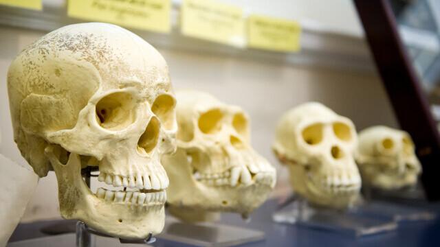 Studiu: Noi informații privind evoluția umană și a limbajului
