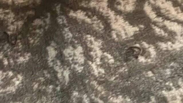 """O femeie s-a trezit cu 18 șerpi sub pat. """"S-ar putea să am nevoie de un cardiolog după asta"""". FOTO - Imaginea 1"""