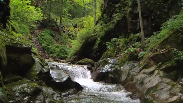 România și alte 10 țări se opun noii strategii a Uniunii Europene de protejare și refacere a pădurilor