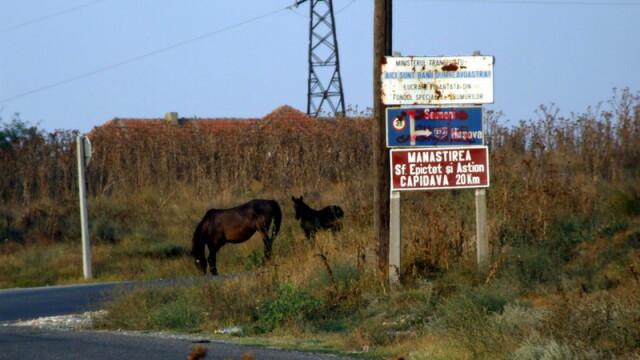 Travel Tips: Aglomeratie dinspre mare spre Bucuresti? Se rezolva! - Imaginea 5