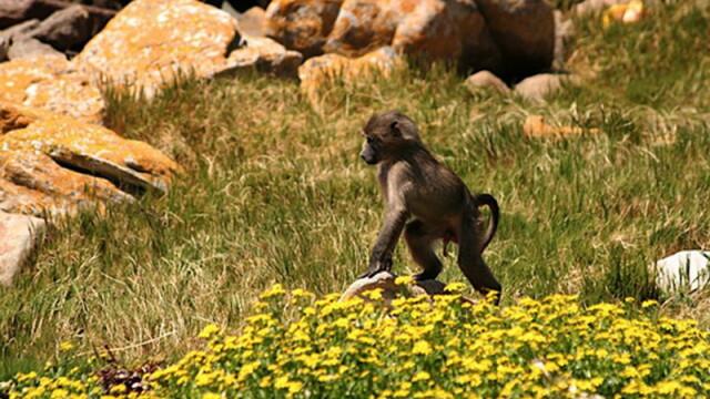 Asa ceva nu se uita! Vacanta de voluntar la crescut maimute in Africa - Imaginea 1
