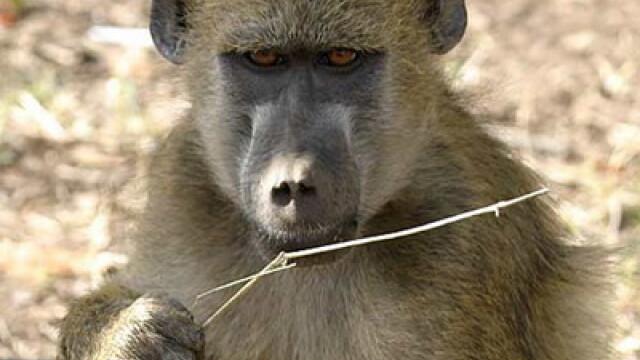 Asa ceva nu se uita! Vacanta de voluntar la crescut maimute in Africa - Imaginea 2