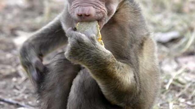 Asa ceva nu se uita! Vacanta de voluntar la crescut maimute in Africa - Imaginea 3