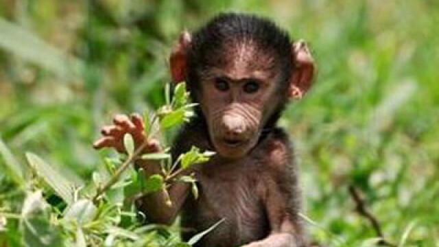 Asa ceva nu se uita! Vacanta de voluntar la crescut maimute in Africa - Imaginea 4