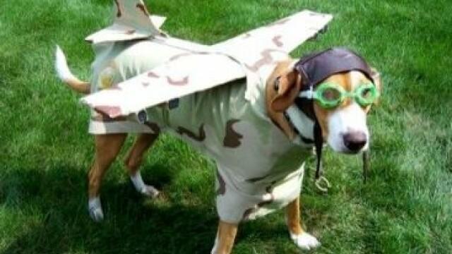Biletul de avion pentru animalul de companie poate fi mai scump ca al tau