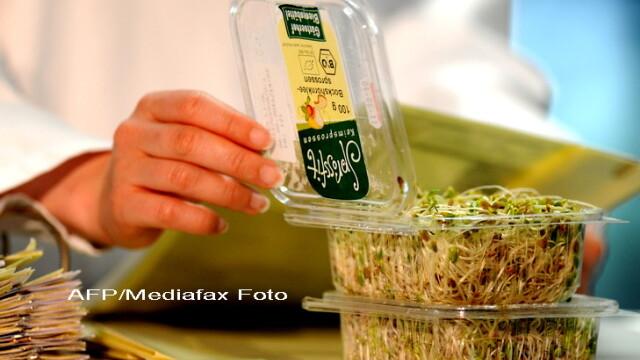 fasole germinata